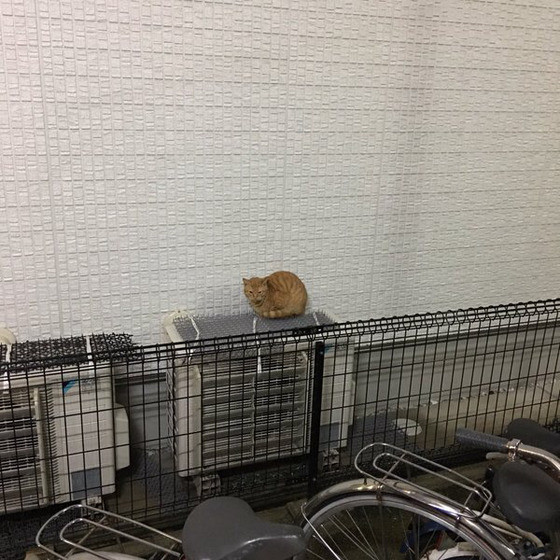 invento-gatos3