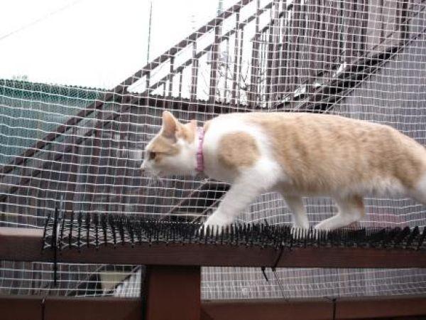 invento-gatos4