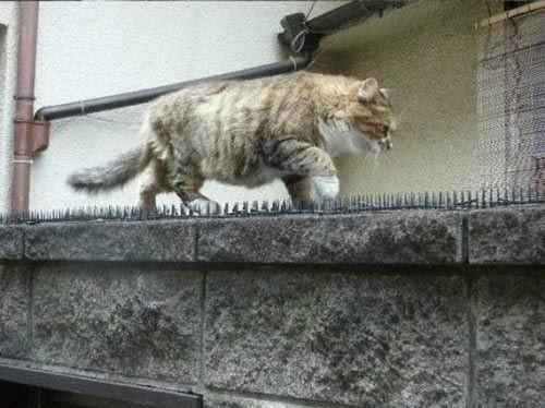 invento-gatos5