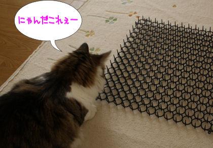 invento-gatos8