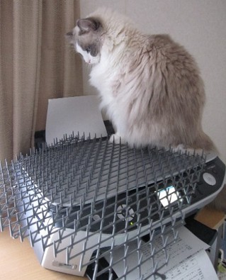 invento-gatos9