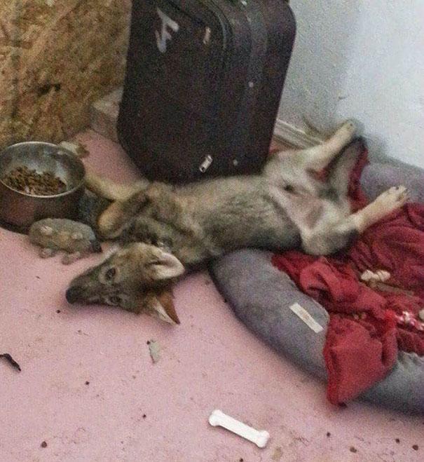 Le regalaron un cachorro, pero no era un perro.