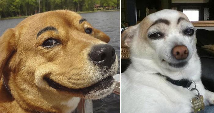perros con cejas 1