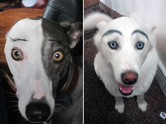 perros con cejas 10