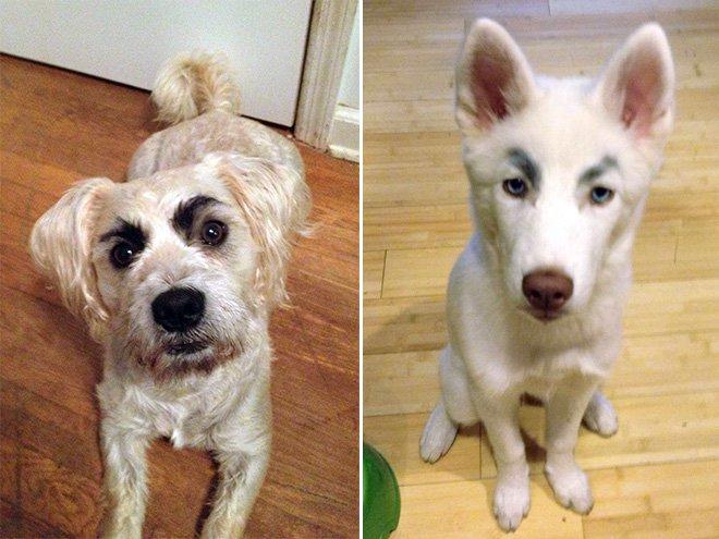 perros con cejas 12