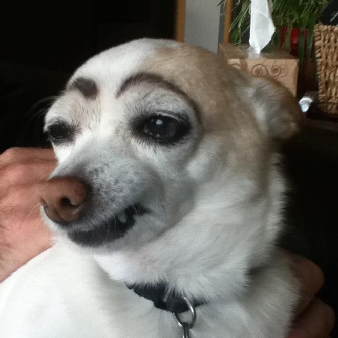perros con cejas 13