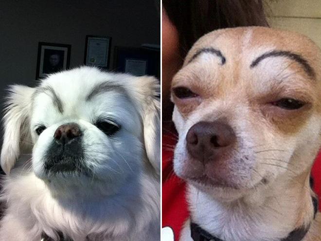 perros con cejas 14