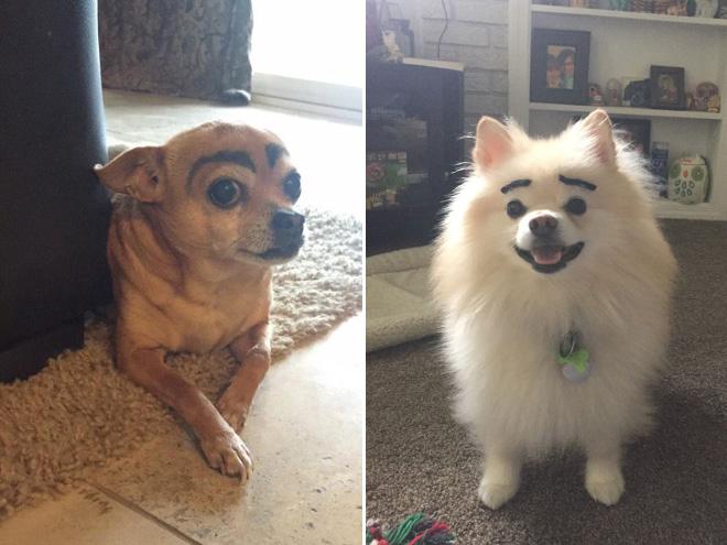 perros con cejas 3