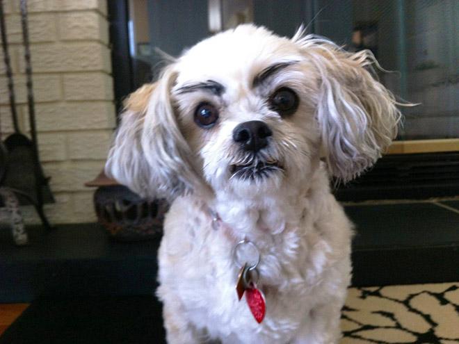 perros con cejas 4