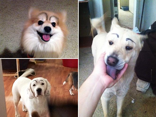 perros con cejas 5