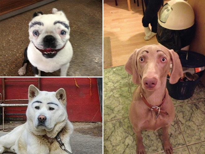 perros con cejas 7