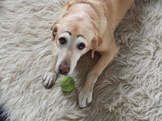 perros con cejas 8