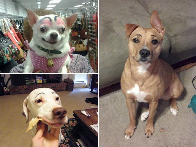 perros con cejas 9