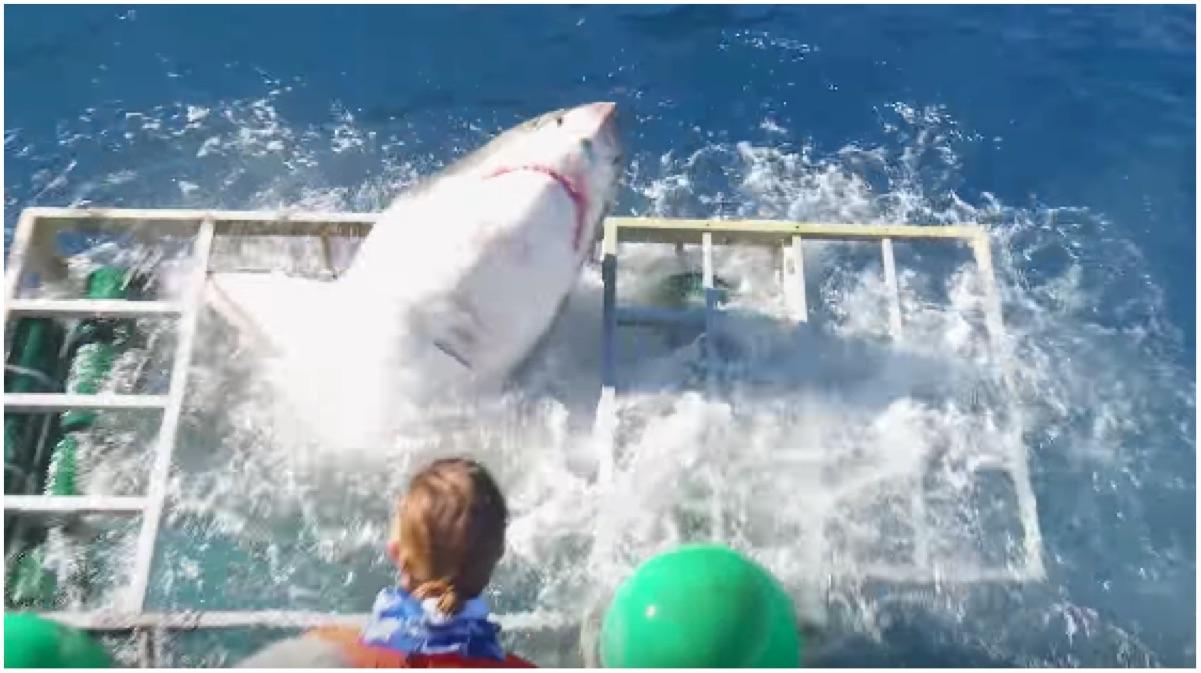 portada tiburon