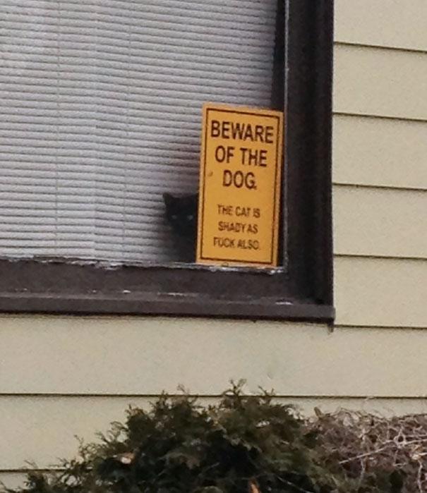 senales graciosas de cuidado con el perro 1