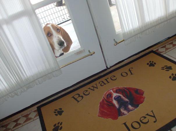 senales graciosas de cuidado con el perro 10
