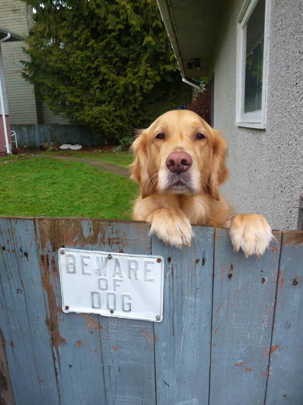 senales graciosas de cuidado con el perro 12