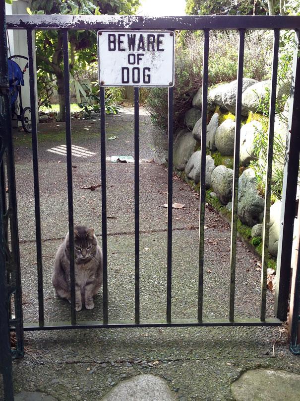 senales graciosas de cuidado con el perro 13