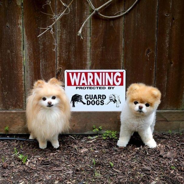 senales graciosas de cuidado con el perro 15