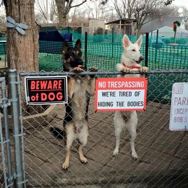 senales graciosas de cuidado con el perro 16