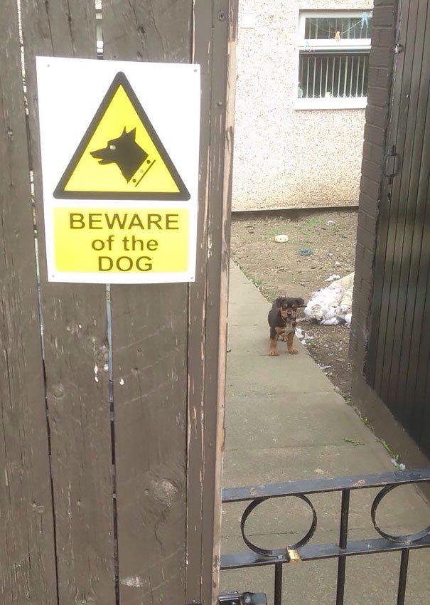 senales graciosas de cuidado con el perro 17