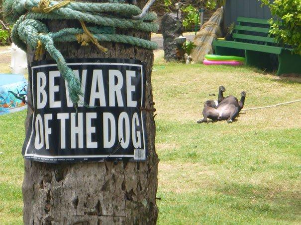 senales graciosas de cuidado con el perro 18