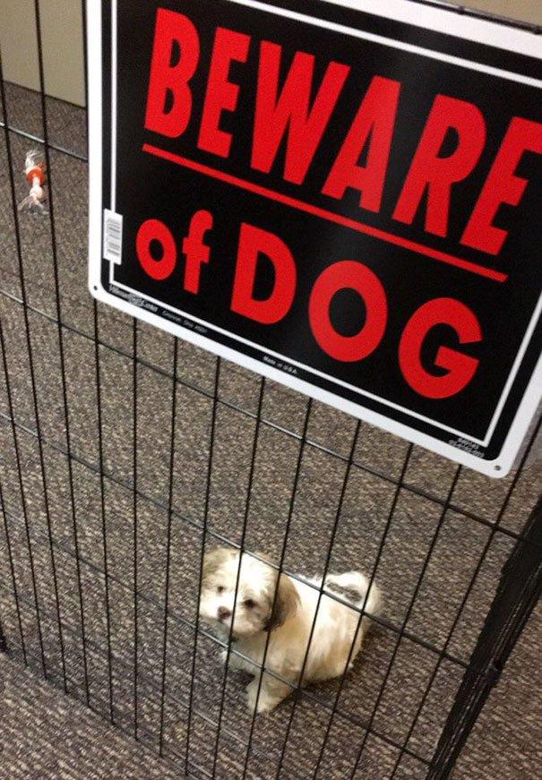 senales graciosas de cuidado con el perro 19