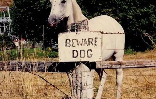 senales graciosas de cuidado con el perro 21