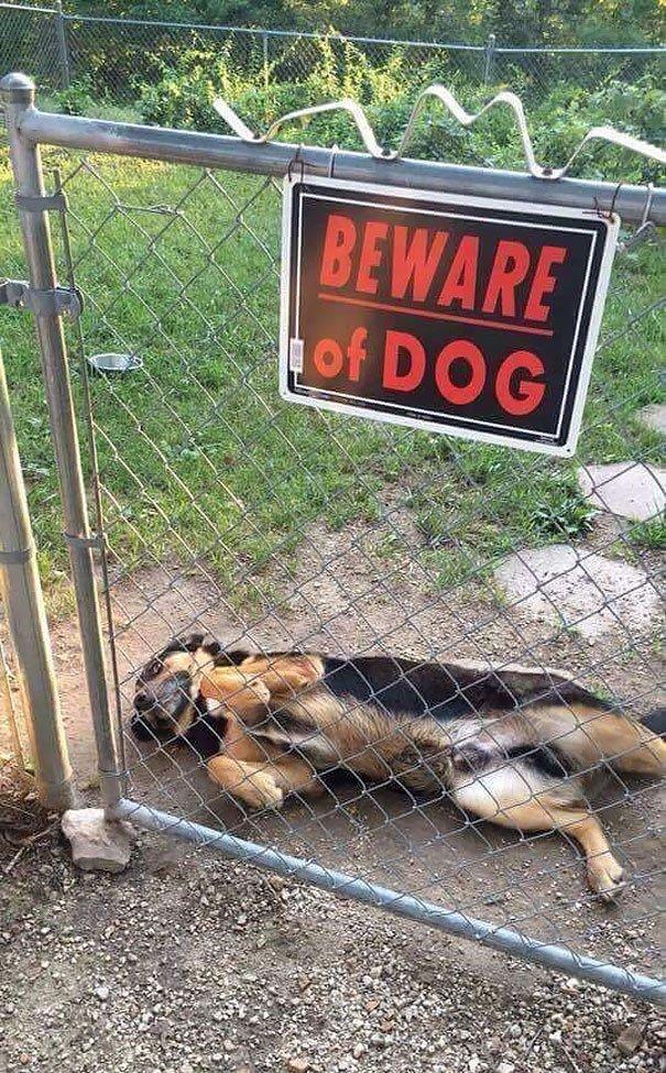 senales graciosas de cuidado con el perro 4