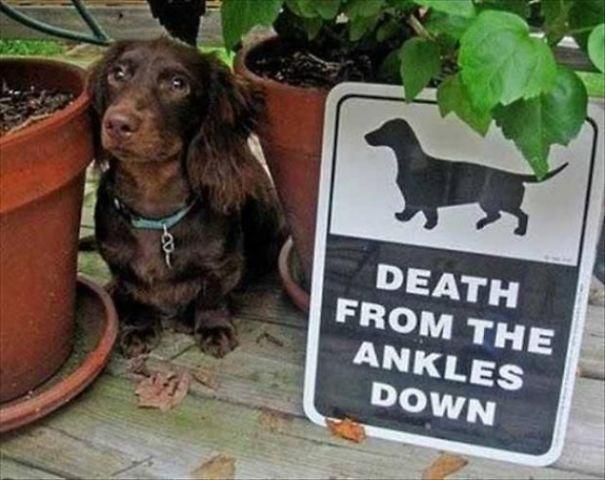 senales graciosas de cuidado con el perro 7