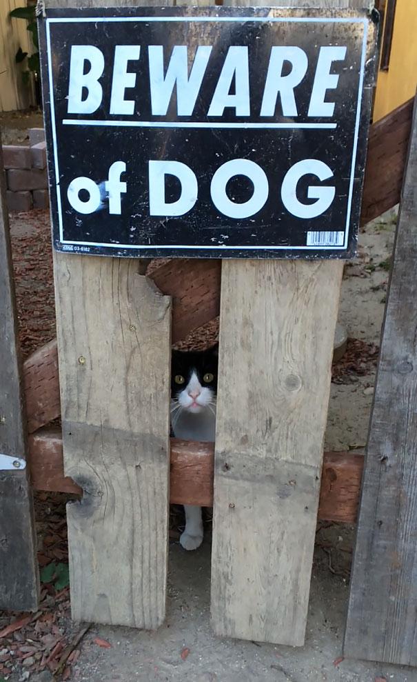 senales graciosas de cuidado con el perro 9