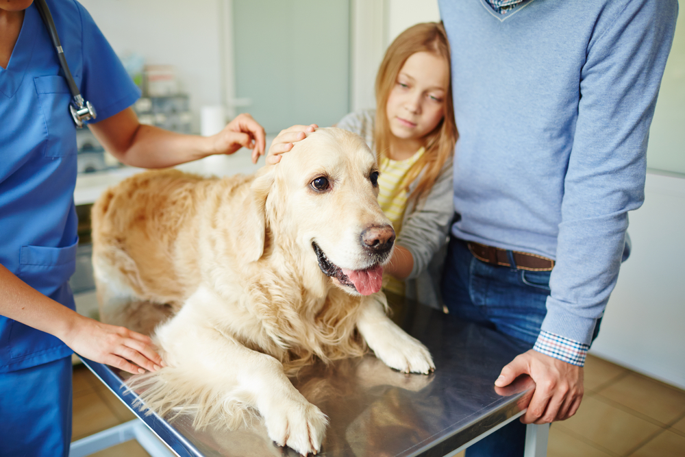 veterinarios 3