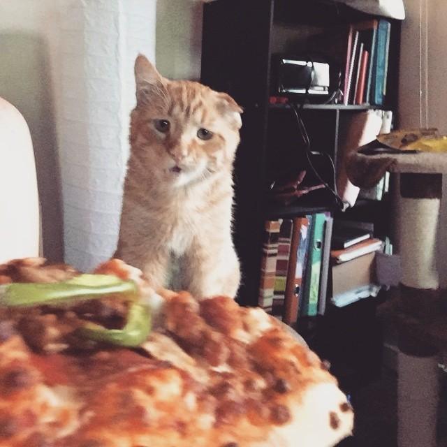 Beben el gato mas triste del mundo 11