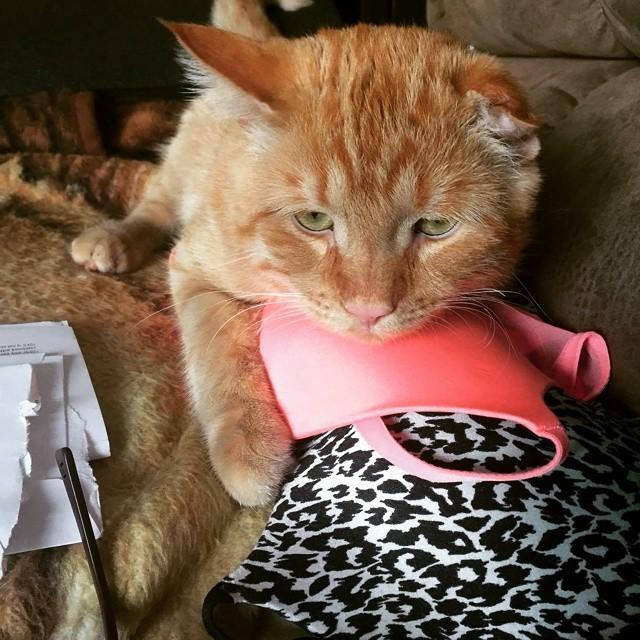 Beben el gato mas triste del mundo 14