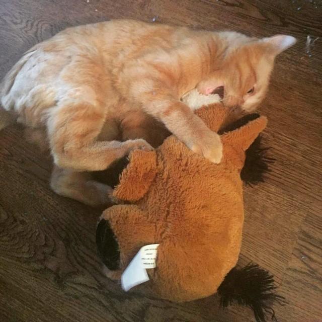 Beben el gato mas triste del mundo 7