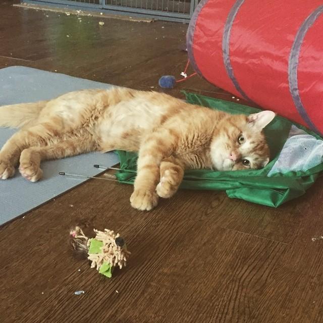 Beben el gato mas triste del mundo 8