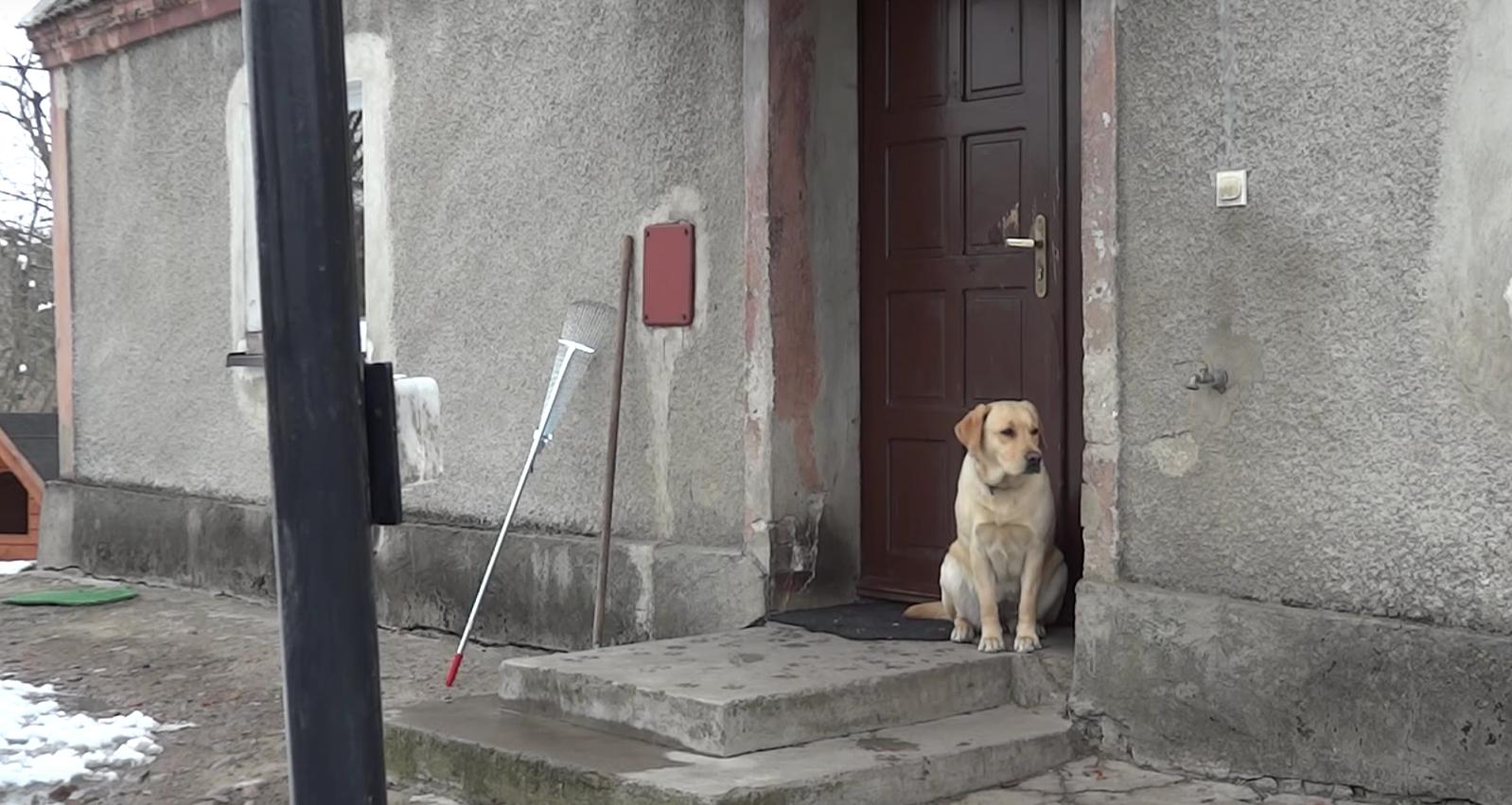 perro puerta