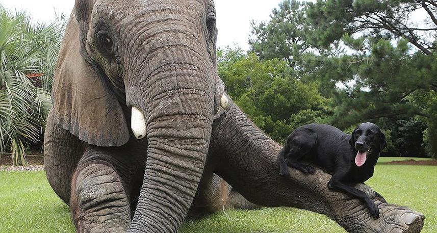amistad-perro-elefante