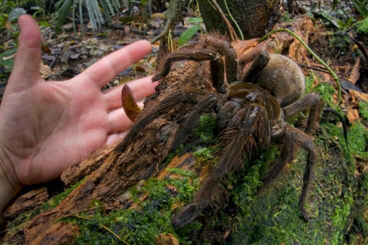 animales anormalmente grandes para su especie 1