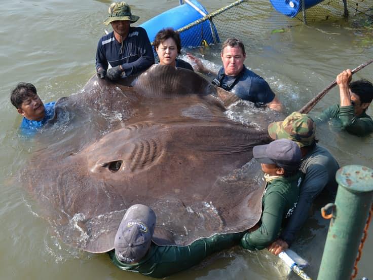 animales anormalmente grandes para su especie 12