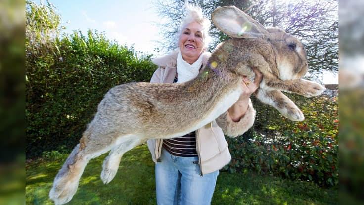 animales anormalmente grandes para su especie 4