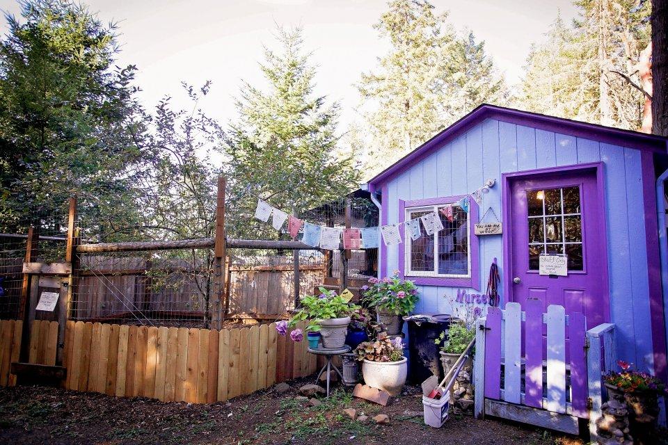 casas personalizadas de un refugio para perros 11