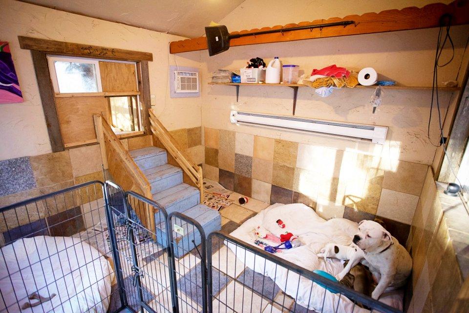 casas personalizadas de un refugio para perros 12