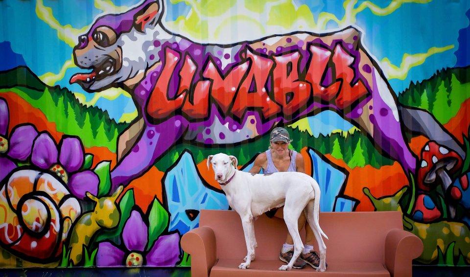 casas personalizadas de un refugio para perros 14