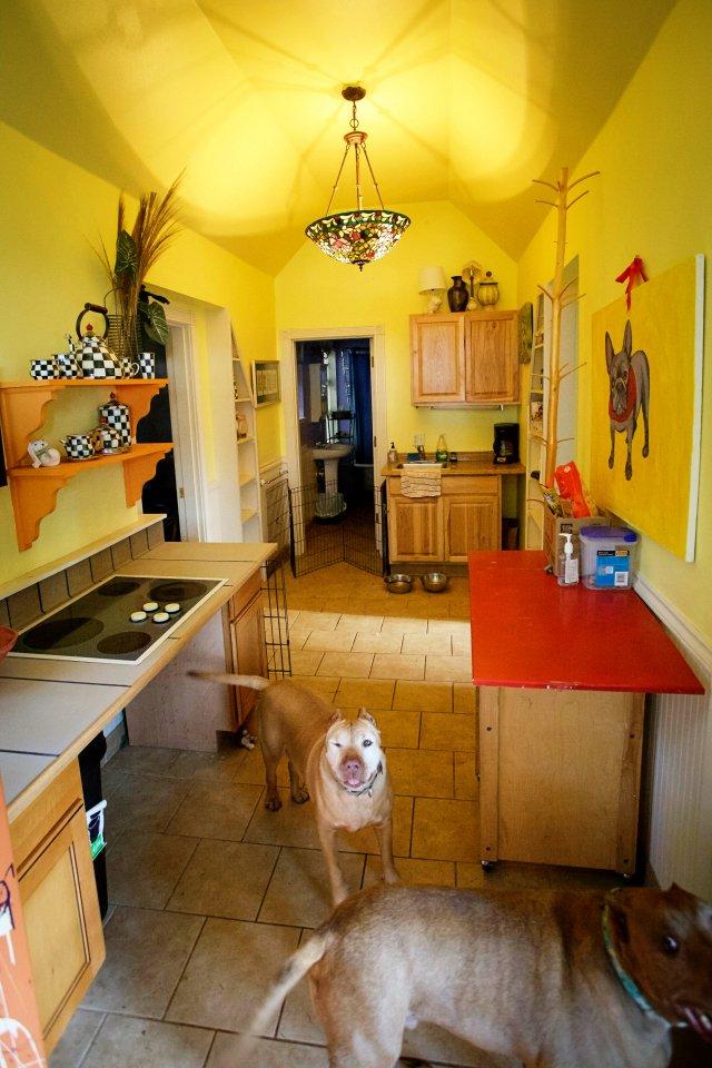 casas personalizadas de un refugio para perros 15