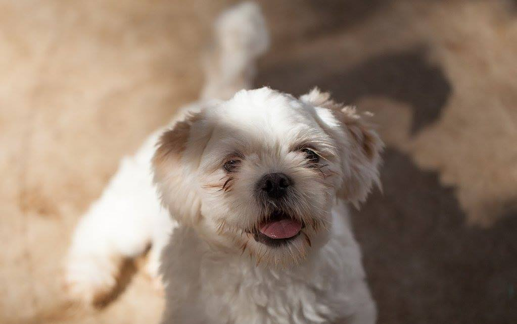 casas personalizadas de un refugio para perros 16