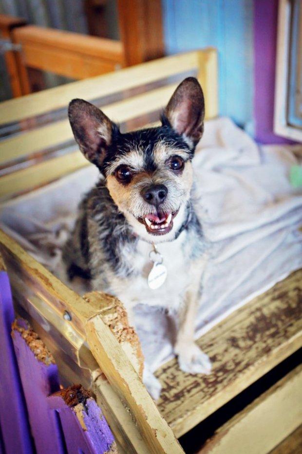 casas personalizadas de un refugio para perros 3