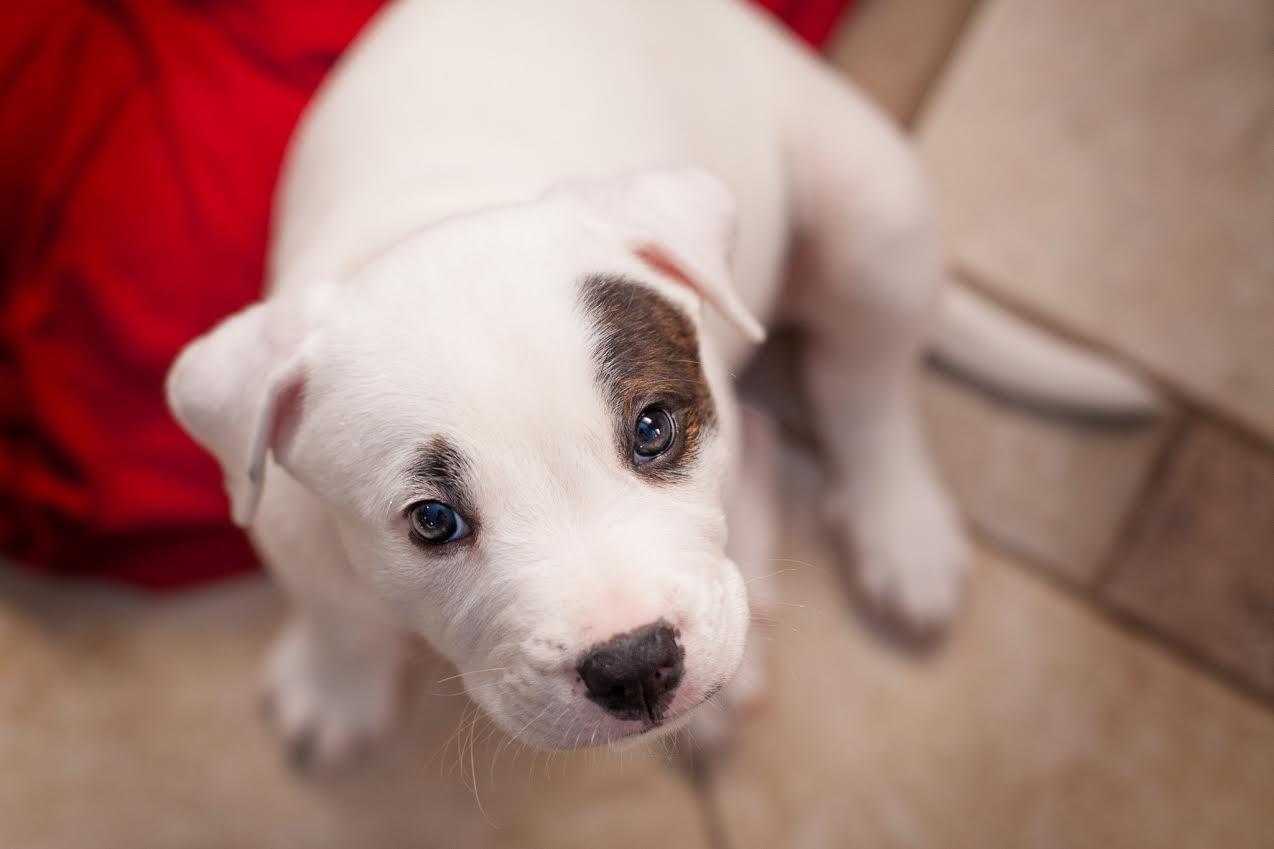 casas personalizadas de un refugio para perros 8