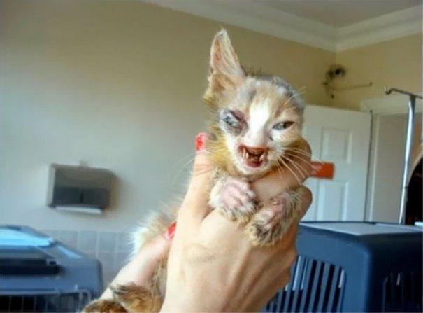 chica salva gato desfigurado en estambul y lo convierte en su mejor amigo 1