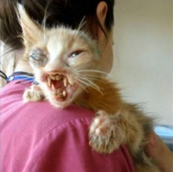 chica salva gato desfigurado en estambul y lo convierte en su mejor amigo 2